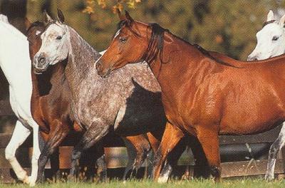 Leiderschap En Paarden Ijsselconsult